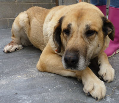 Picture of Estrella - not at Mutts